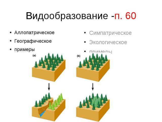 Видообразование -п. 60АллопатрическоеГеографическоепримеры