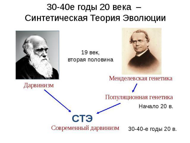 30-40е годы 20 века – Синтетическая Теория Эволюции