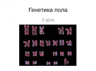 Генетика пола 2 урок, Пленкина М П, Гимназия № 27, Курган