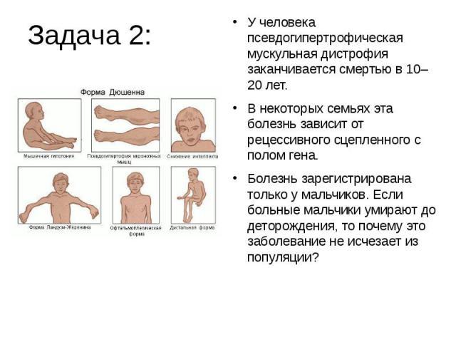 Задача 2:У человека псевдогипертрофическая мускульная дистрофия заканчивается смертью в 10–20 лет. В некоторых семьях эта болезнь зависит от рецессивного сцепленного с полом гена. Болезнь зарегистрирована только у мальчиков. Если больные мальчики ум…