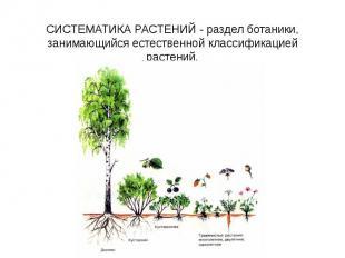 СИСТЕМАТИКА РАСТЕНИЙ - раздел ботаники, занимающийся естественной классификацией