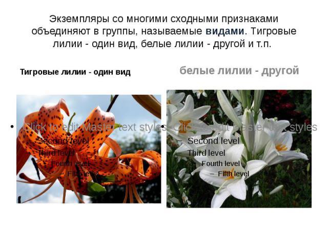 Экземпляры со многими сходными признаками объединяют в группы, называемые видами. Тигровые лилии - один вид, белые лилии - другой и т.п. Тигровые лилии - один вид