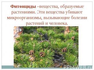 Фитонциды –вещества, образуемые растениями. Эти вещества убивают микроорганизмы,