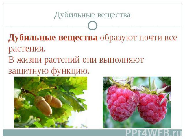 Дубильные вещества Дубильные вещества образуют почти все растения.В жизни растений они выполняют защитную функцию.