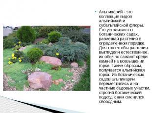 Альпинарий - это коллекция видов альпийской и субальпийской флоры. Его устраиваю