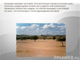 Калахари называют пустыней, хотя она больше похожа на полупустыню, поскольку сре