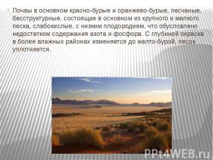 Почвы в основном красно-бурые и оранжево-бурые, песчаные, бесструктурные, состоя
