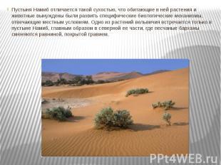 Пустыня Намиб отличается такой сухостью, что обитающие в ней растения и животные