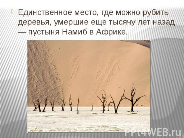 Единственное место, где можно рубить деревья, умершие еще тысячу лет назад — пустыня Намиб в Африке.