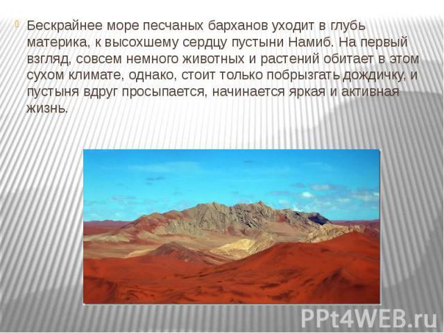 Бескрайнее море песчаных барханов уходит в глубь материка, к высохшему сердцу пустыни Намиб. На первый взгляд, совсем немного животных и растений обитает в этом сухом климате, однако, стоит только побрызгать дождичку, и пустыня вдруг просыпается, на…