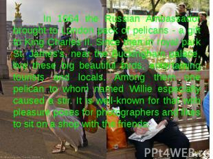 In 1664 the Russian Ambassador brought to London pack of pelicans - a gift to Ki