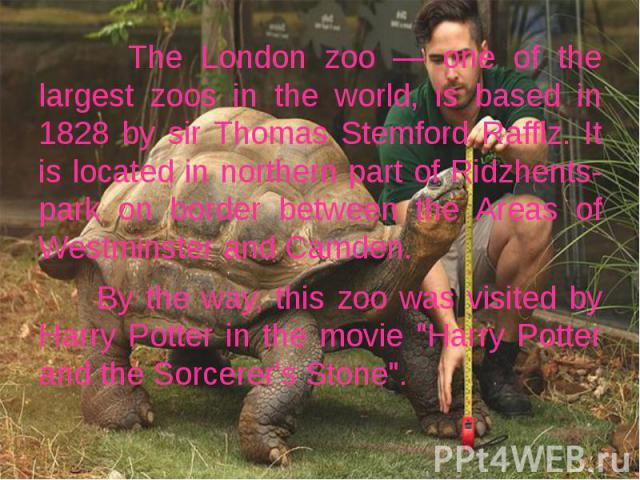 The London zoo — one of the largest zoos in the world, is based in 1828 by sir Thomas Stemford Rafflz. It is located in northern part of Ridzhents-park on border between the Areas of Westminster and Camden. The London zoo — one of the largest zoos i…