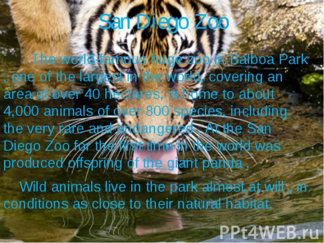 San Diego Zoo The world-famous huge zoo in Balboa Park , one of the largest in the world, covering an area of over 40 hectares, is home to about 4,000 animals of over 800 species, including the very rare and endangered . At the San Diego Zoo for the…