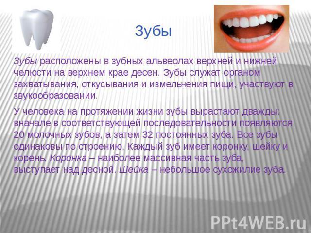 ЗубыЗубы расположены в зубных альвеолах верхней и нижней челюсти на верхнем крае десен. Зубы служат органом захватывания, откусывания и измельчения пищи, участвуют в звукообразовании.У человека на протяжении жизни зубы вырастают дважды: вначале в со…
