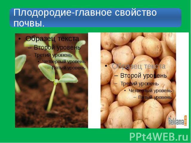 Плодородие-главное свойство почвы.