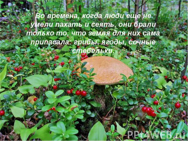 Во времена, когда люди еще не умели пахать и сеять, они брали только то, что земля для них сама припасала: грибы, ягоды, сочные стебельки.