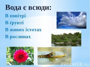 Вода є всюди: Вода є всюди: В повітрі В ґрунті В живих істотах В рослинах