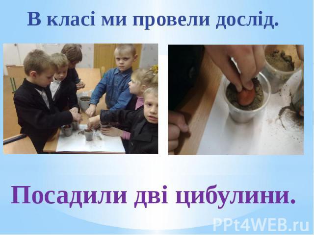 В класі ми провели дослід. Посадили дві цибулини.