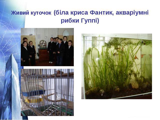 Живий куточок (біла криса Фантик, акваріумні рибки Гуппі)