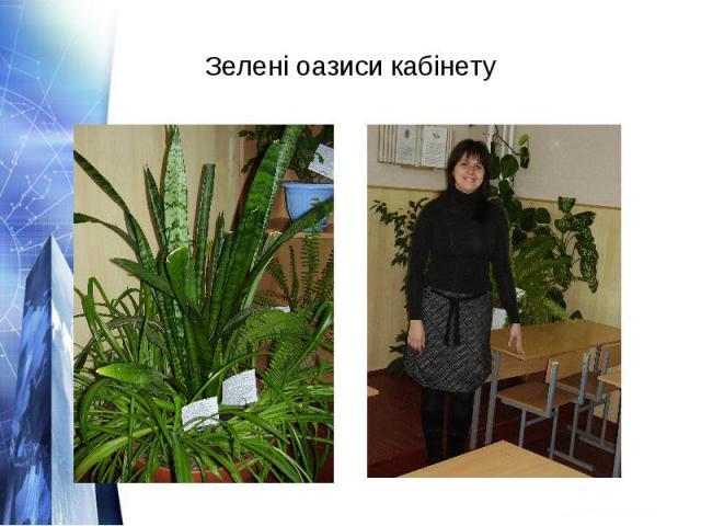 Зелені оазиси кабінету