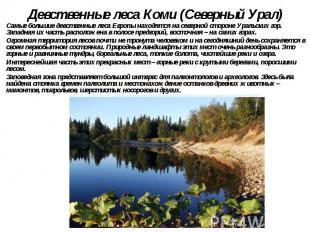 Девственные леса Коми (Северный Урал) Самые большие девственные леса Европы нахо