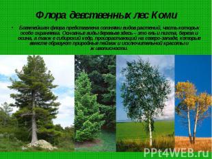 Флора девственных лес Коми Богатейшая флора представлена сотнями видов растений,