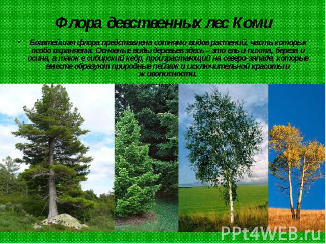 Флора девственных лес Коми Богатейшая флора представлена сотнями видов растений, часть которых особо охраняема. Основные виды деревьев здесь – это ель и пихта, береза и осина, а также сибирский кедр, произрастающий на северо-западе, которые вместе о…