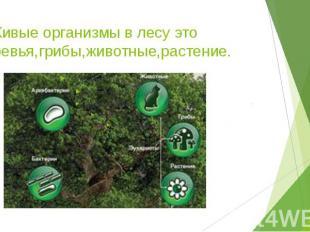 2.Живые организмы в лесу это деревья,грибы,животные,растение.