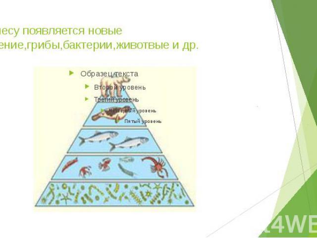 3.В лесу появляется новые растение,грибы,бактерии,животвые и др.