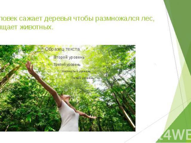 5.Человек сажает деревья чтобы размножался лес, защищает животных.