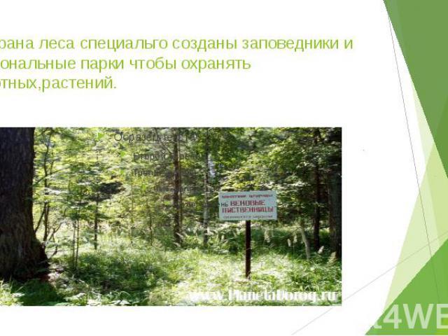 6.Охрана леса специальго созданы заповедники и национальные парки чтобы охранять животных,растений.