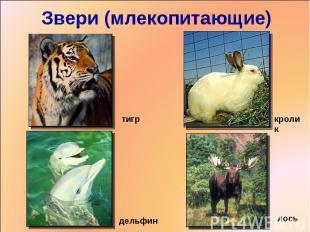 Звери (млекопитающие) тигркроликдельфинлось