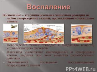 Воспаление Воспаление – это универсальная защитная реакция на любое повреждение