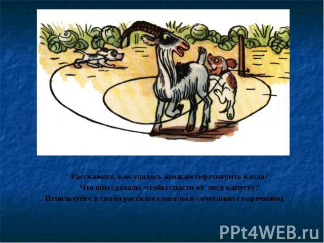 Расскажите, как удалось щенкам перехитрить козла? Что они сделали, чтобы спасти от него капусту? Используйте в своём рассказе глаголы в сочетании с наречиями.