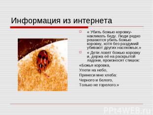 Информация из интернета « Убить божью коровку- накликать беду. Люди редко решают
