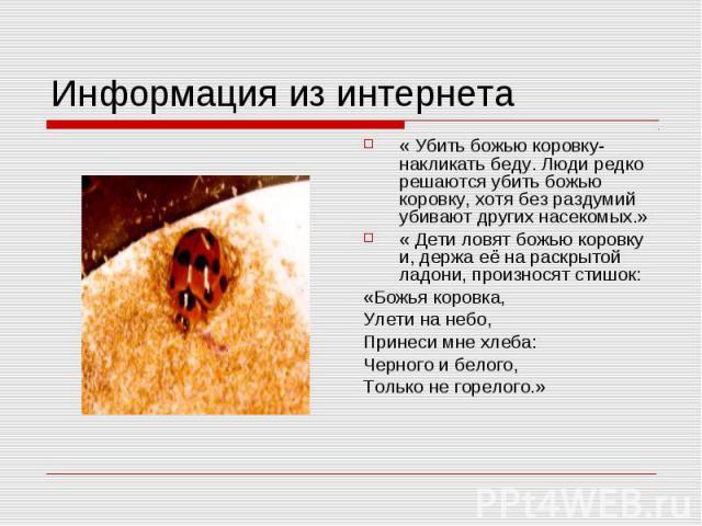Информация из интернета « Убить божью коровку- накликать беду. Люди редко решаются убить божью коровку, хотя без раздумий убивают других насекомых.»« Дети ловят божью коровку и, держа её на раскрытой ладони, произносят стишок:«Божья коровка,Улети на…