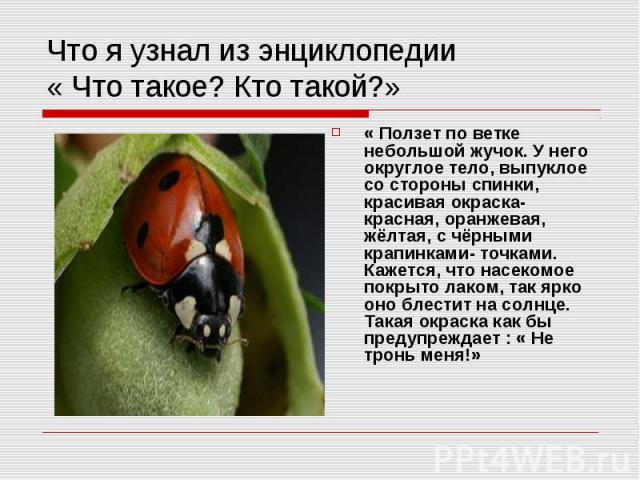 Что я узнал из энциклопедии « Что такое? Кто такой?» « Ползет по ветке небольшой жучок. У него округлое тело, выпуклое со стороны спинки, красивая окраска- красная, оранжевая, жёлтая, с чёрными крапинками- точками. Кажется, что насекомое покрыто лак…