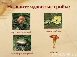 Назовите ядовитые грибы: мухомор красныйложноопёнокмухомор пантерныйлисичка