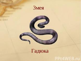 ЗмеяГадюка