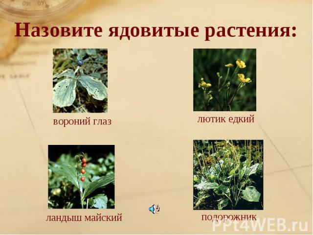Назовите ядовитые растения:вороний глазлютик едкийландыш майскийподорожник