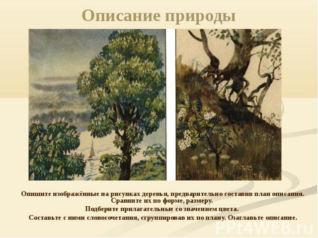 Описание природы Опишите изображённые на рисунках деревья, предварительно составив план описания. Сравните их по форме, размеру. Подберите прилагательные со значением цвета. Составьте с ними словосочетания, сгруппировав их по плану. Озаглавьте описание.