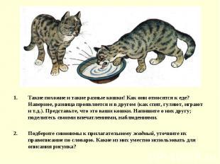 Такие похожие и такие разные кошки! Как они относятся к еде? Наверное, разница п