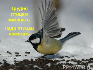 Трудно птицам зимовать Надо птицам помогать