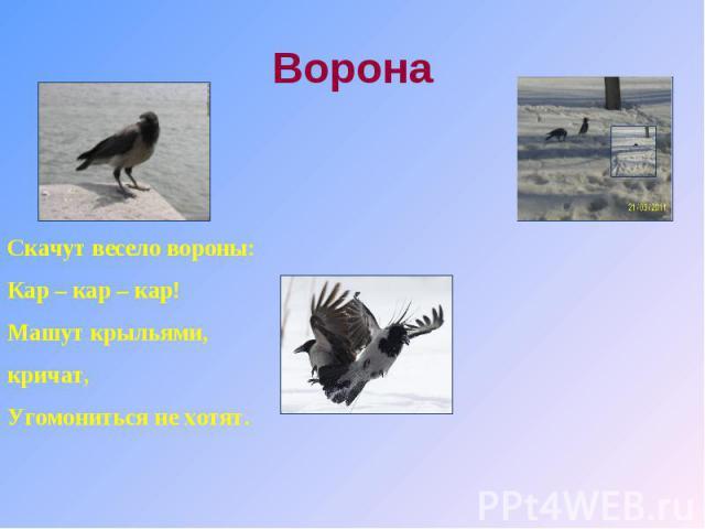 Ворона Скачут весело вороны:Кар – кар – кар!Машут крыльями, кричат,Угомониться не хотят.