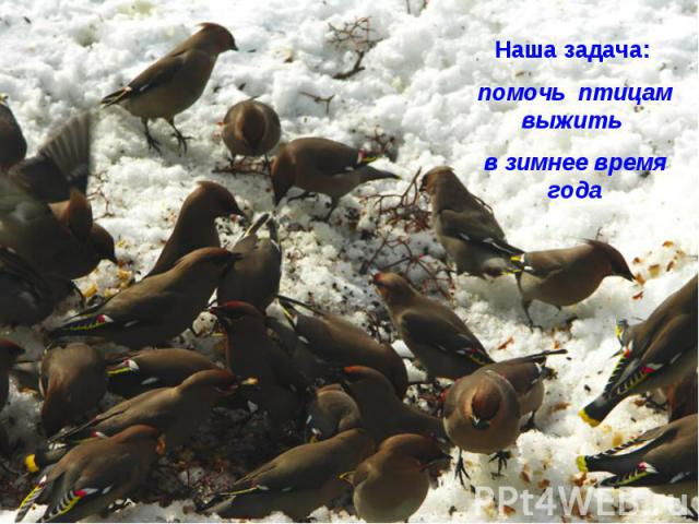 Наша задача: помочь птицам выжить в зимнее время года
