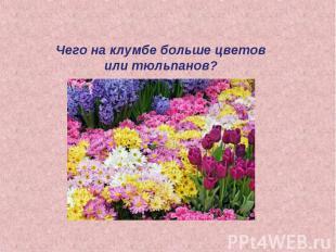 Чего на клумбе больше цветов или тюльпанов?