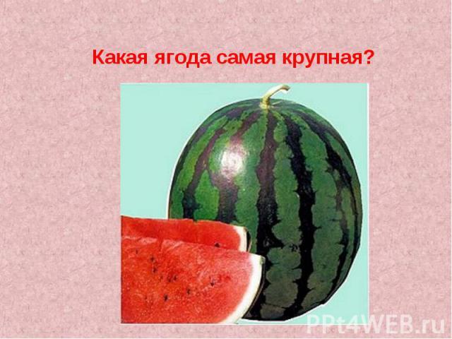Какая ягода самая крупная?