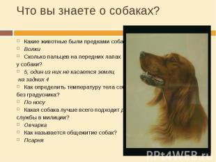 Что вы знаете о собаках? Какие животные были предками собак?ВолкиСколько пальцев