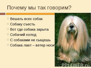 Почему мы так говорим? Вешать всех собакСобаку съестьВот где собака зарытаСобачи
