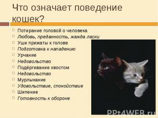 Что означает поведение кошек? Потирание головой о человекаЛюбовь, преданность, ж